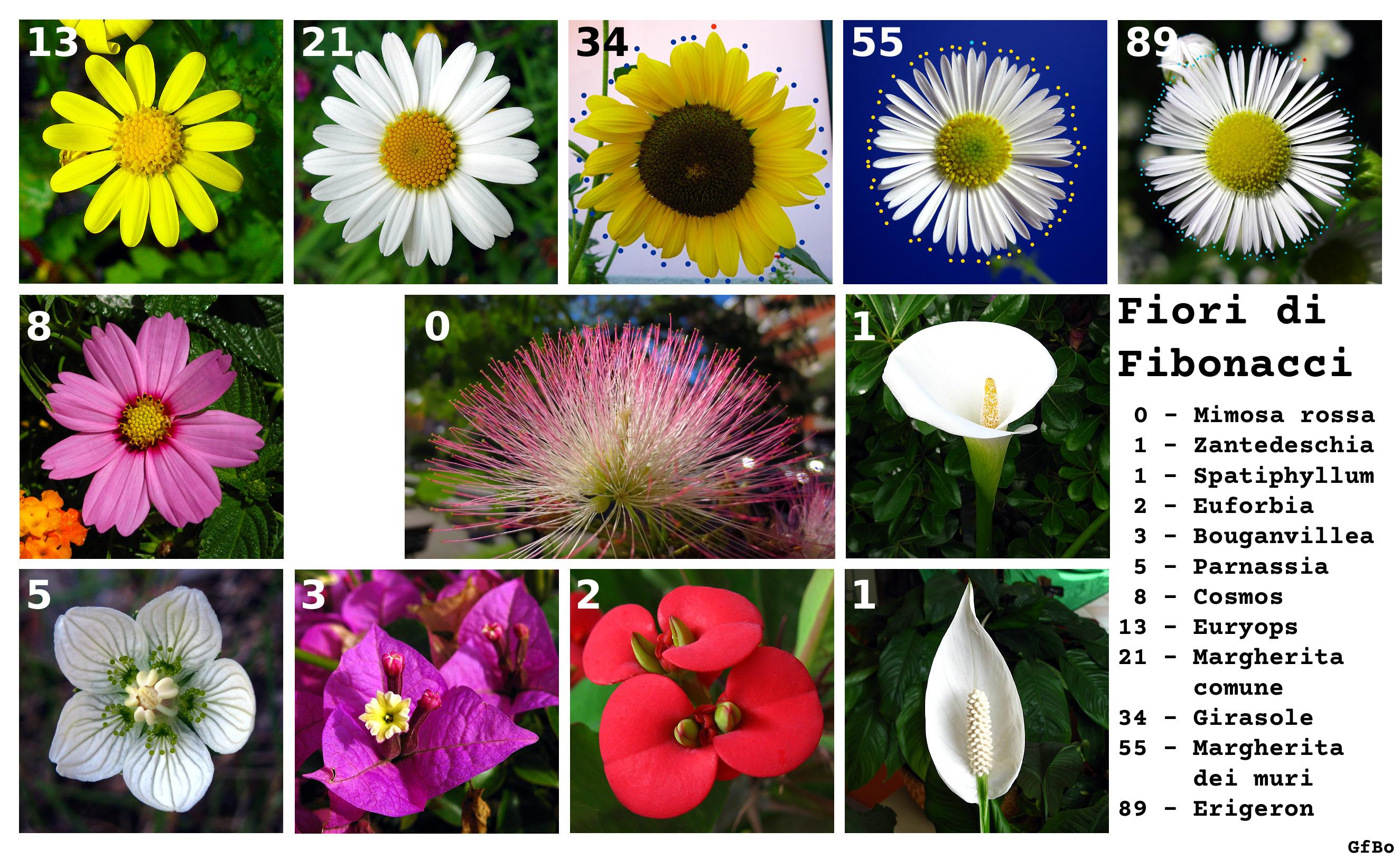 Tutti I Tipi Di Fiori.Fiori Di Fibonacci