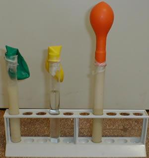 Yeast Fermentation Balloon yeast and balloons